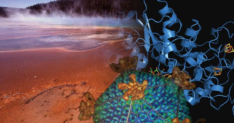 It is only recently that scientists discovered microorganisms living and actually thriving in the most extreme environments on Earth. In Yellowstone National Park, scientists are currently bioprospecting and trying to characterize the hydrogen-producing organisms and enzymes there. Take a tour of some of the world's most harsh environments.
