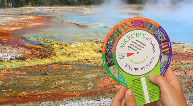 TBI has created a new Yellowstone microbial identification wheel and an accompanying book called Living Colors: Microbes of Yellowstone National Park, a paperback guide that introduces the public to some of the microbes of Yellowstone.